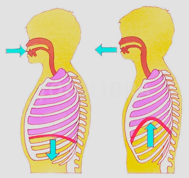BREATHING DIAGRAM-ILLUSTRATION