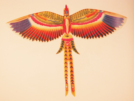 chinese_kite_paradise_flycatcher78d32fbb3b76b9014fcc
